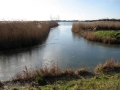 The north-western edge of Hickling Broad, near to Hickling Heath  Picture kindly supplied by Evelyn Simak